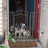 Photo for Re Accruing Dog Sitting In Your Home