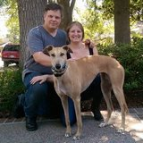 Photo for Seeking A Reliable Caregiver To Walk Our Super Sweet Greyhound!