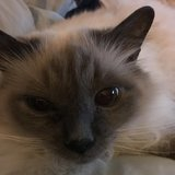 Photo for Sitter Needed For 2 Cats In Moosic