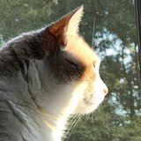 Photo for Sitter Needed For 4 Exotic Animals, 4 Mammals, 4 Cats In The Plains