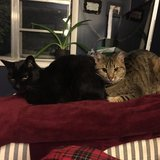Photo for Sitter Needed For 5 Cats In Doylestown