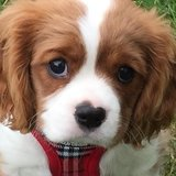 Photo for Weekday Walker Needed For 1 Puppy In Walworth