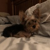 Photo for Looking For A Pet Sitter For In Fort Mill