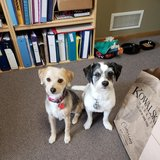 Photo for Sitter Needed For 2 Dogs In Minneapolis