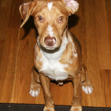 Photo for Sitter Needed For 1 Dog In Belmont
