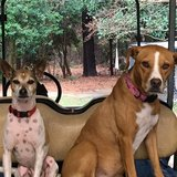 Photo for Sitter Needed For 1 Horse, 2 Cats, 3 Dogs In Pavo