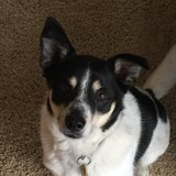 Photo for Sitter Needed For 1 Dog In Fairport/Penfield Area
