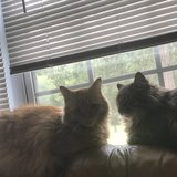 Photo for Looking For A Pet Sitter For 2 Cats In El Paso