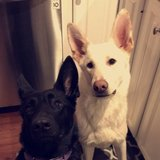 Photo for Looking For A Pet Sitter For 2 Dogs In Sandwich