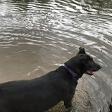 Photo for Looking For A Pet Sitter For 1 Dog In Mobile