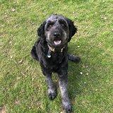 Photo for Dog Walker, 30mins -1 Hour