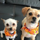 Photo for Dog Walker For 2 Small Dogs!