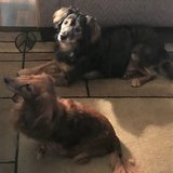 Photo for Sitter Needed For 2 Dogs In San Antonio