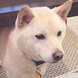 Photo for Basic Overnight Help For Injured Dog In Soho