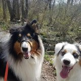 Photo for Walker Needed For 2 Dogs In Mukilteo