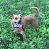 Photo for Looking For A Pet Sitter For 1 Dog In Columbus