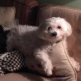 Photo for Walker/Care Needed For 1 Dog In Minnetonka