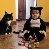 Photo for Kitties Need Check-ins During Holidays!