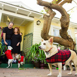 Photo for Five Days. 24/7 Pet Sitting Job In North Park.San Diego.Feb 2019