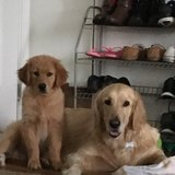 Photo for Looking For A Pet Sitter For 2 Dogs In Fort Wayne