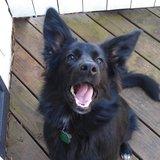 Photo for Walker Needed For 1 Dog