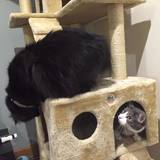 Photo for Looking For A Pet Sitter For 4 Cats In Quincy
