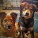 Photo for Dog Sitter For Two Dogs