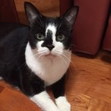 Photo for Sitter Needed For 1 Cat In Reston
