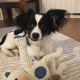 Photo for Walker Needed For 1 Dog In Redmond