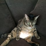 Photo for Looking For A Pet Sitter For 1 Cat In Delray Beach