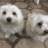 Photo for Looking For A Pet Sitter For 2 Dogs In Nashua