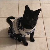 Photo for Looking For A Pet Sitter For 1 Cat In Phoenix