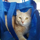 Photo for Looking For A Pet Sitter For 4 Cats In Greeneville