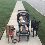 Photo for Nanny Needed For 1 Child In Gallatin