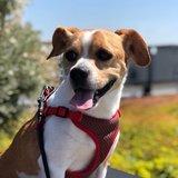 Top 10 Dog Walker Jobs in Seattle, WA Near Me (Free to Apply) - Care com