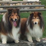 Photo for Walker Needed For 2 Dogs In Somers