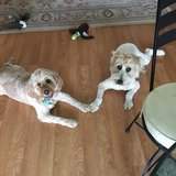 Photo for Looking For A Pet And House  Sitter For 2 Dogs In Clearwater