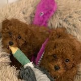 Photo for Sitter Needed For 2 Puppies In Jersey City