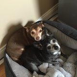 Photo for Help With My Two Fur Babies!