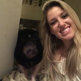 Photo for Sitter Needed For 1 Pig In Costa Mesa