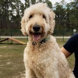 Photo for Looking For A Daily Dog Walker For Our Goldendoodle