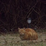 Photo for Sitter Companion Needed For 1 Cat & 1 Elderly Person In Knightdale