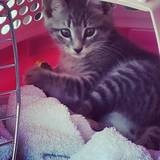 Photo for Active And Fun Sitter For 1 Kitten