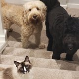 Photo for Sitter/walker Needed For 2 Dogs &1 Cat In Snohomish