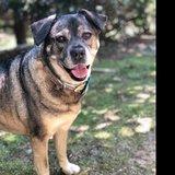 Photo for Dog Feeder