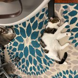 Photo for Sitter Needed For 2 Cats In Apopka