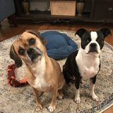 Photo for Looking For A Pet Sitter For 4 Dogs In Foster City