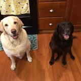 Photo for Looking For A Pet Sitter For 2 Dogs And 1 Cat In Marysville, OH 43040