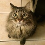 Photo for Sitter Needed For 2 Cats In Thousand Oaks
