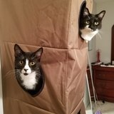 Photo for Looking For A Pet Sitter For 2 Cats In Reston